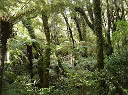 rain forests pictures