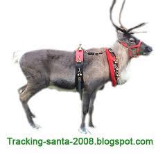 reindeers of santa claus