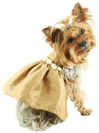 gold taffeta dress