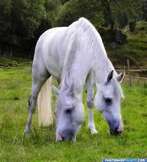 fun horses