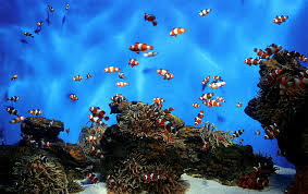 clownfish tanks
