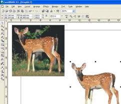 corel draw picture