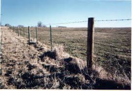 cattle wire