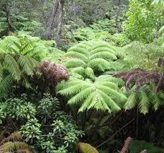 extinct plant species