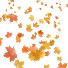 autumn leaves gif