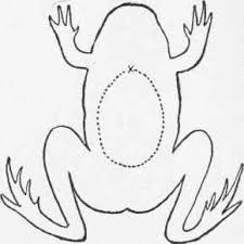 frogs body