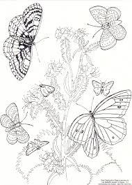 pictures of butterflies to color