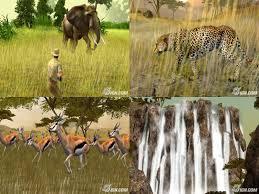 safari movie
