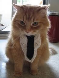 cat ties