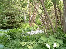 gardening shade