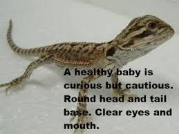reptile baby