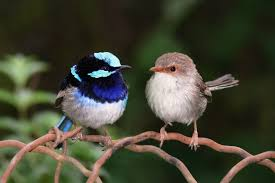 pictures of wrens