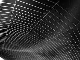 kinds of spider webs
