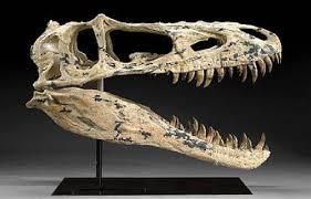 lizard skull