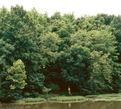 environment ecosystems
