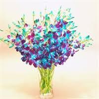 blue orchids flower