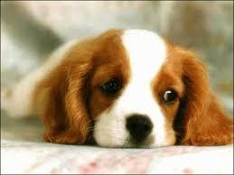Rüyada+köpek+saldırması+saldırısı+sürüsü