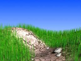 grass land pictures