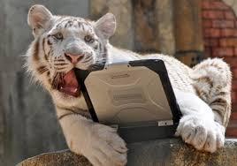 laptops tiger