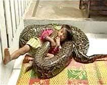 cobra python