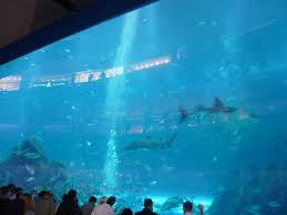 biggest fish tank