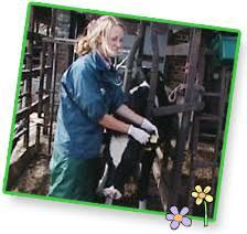 farm animal vet