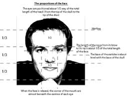 face proportion