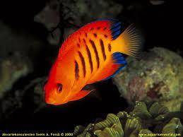 tipo de pez
