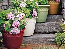 plants containers