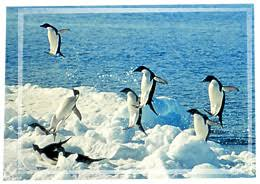 penguins adaptations