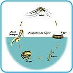 adaptaciones morfologicas