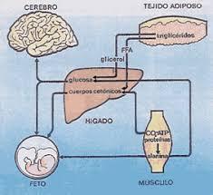 adaptacion fisiologica