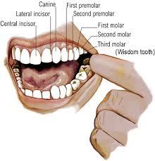 crown on teeth