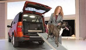 dog friendly car