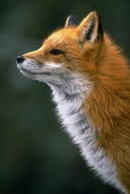 fox national geographic
