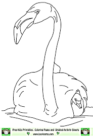 flamingo coloring sheets