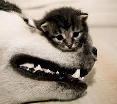 dog kittens