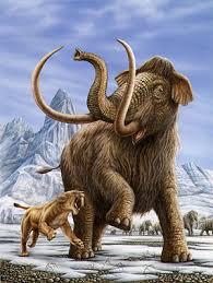 mammoth animals