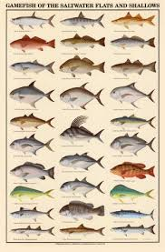saltwater fish guide