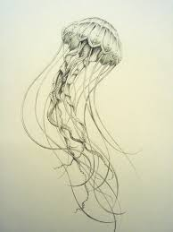 jellyfish drawings