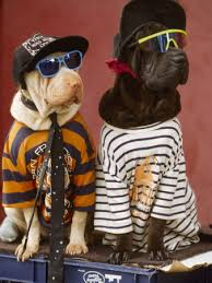 clothes dogs