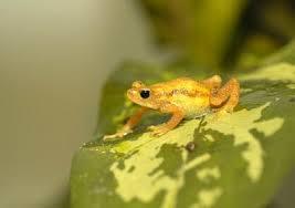 frogs stuff