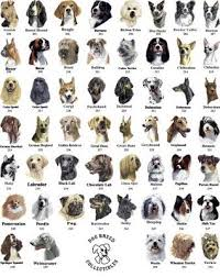 dog breed photos