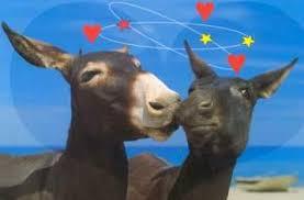apareamiento de burros