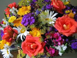 horticulture flowers