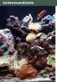 reef aquarium setup