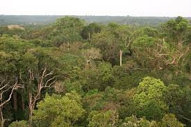 brazils rainforests