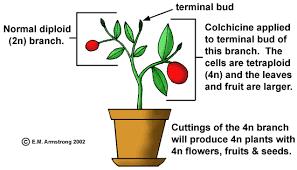 plant hybrids
