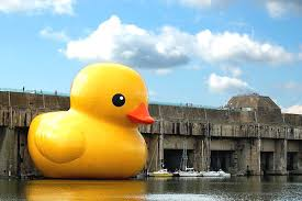 rubber duck picture