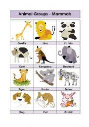 mammals worksheets